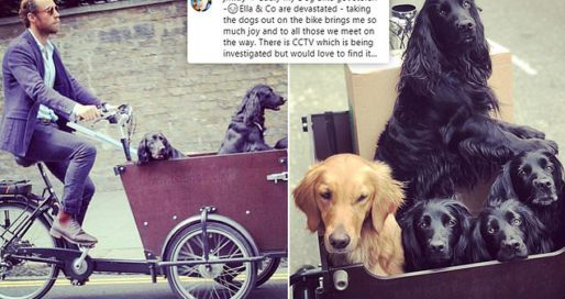 James Middleton pleads for help after his dog bike is stolen