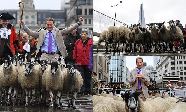 Michael Portillo leads a flock of sheep over London Bridge as part of centuries-old tradition