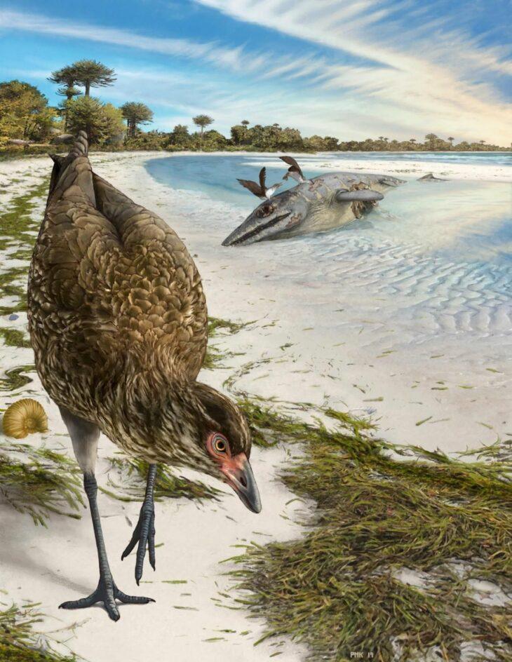 Oldest bird fossil discovered, nicknamed 'wonderchicken'