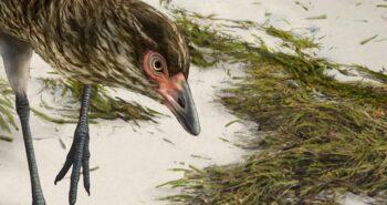 Scientists discover 'Wonderchicken,' the oldest modern bird fossil – CNET