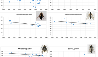 Natural history museum collection and citizen science data show advancing phenology of Danish hoverflies (Insecta: Diptera, Syrphidae) with increasing annual temperature