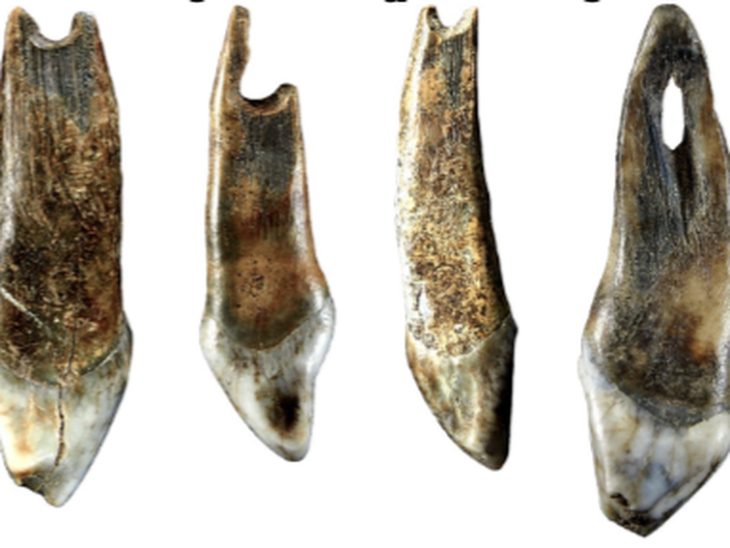 Cave fossils show modern humans shared memes with Neanderthals – CNET