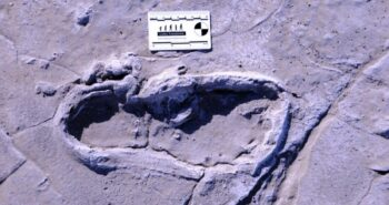 Hundreds of Fossilized Human Footprints Provide a Glimpse of Ancient Life in Africa