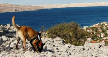 Indiana Bones: The archaeologist dogs discovering ancient remains