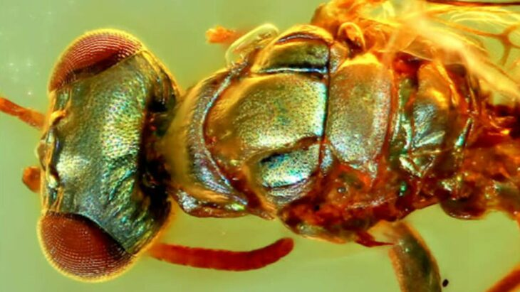 Incredible Amber Fossils Reveal the True Colors of Ancient Insects