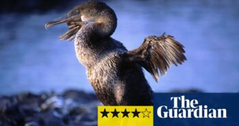Equator review – a big new beast in the nature TV world