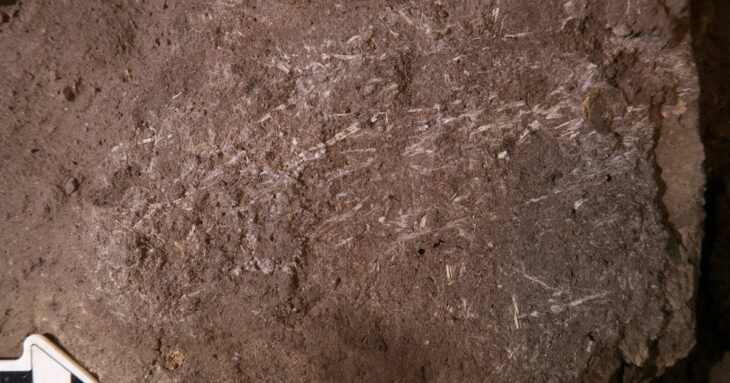 Early human bedding more than 200,000 years old found in South Africa
