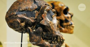 Horse eyeballs and bone hammers: surprising lives of the Neanderthals