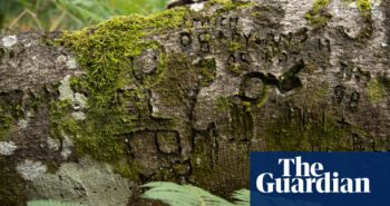 From war to 'witch marks': graffiti carved into New Forest trees reveals past lives